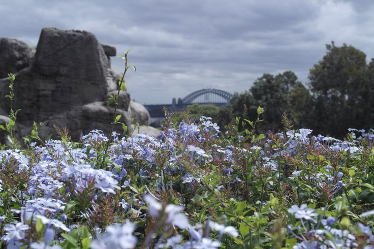 Taronga Zoo Sydney, view over the bridge and harbour