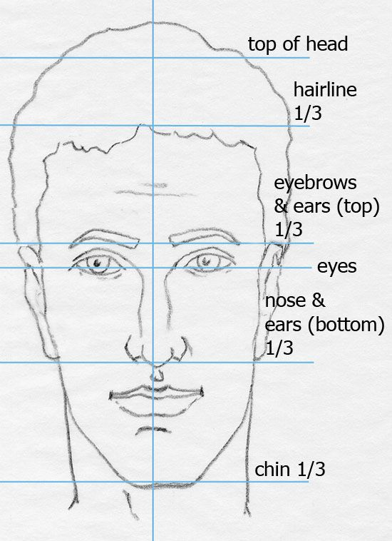 face drawing with proportion labeled