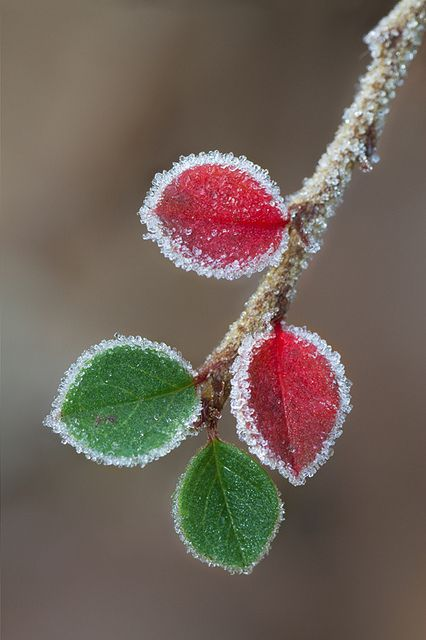 A touch of frost by smir on Flickr.