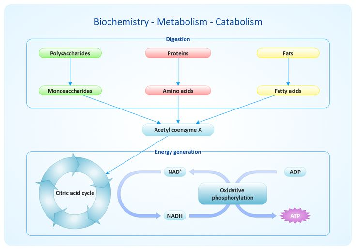metabolism biochem assignment Course information and materials: to access the pdf files, you'll need adobe acrobat if you need to download it to your own computer for free, here is the website.