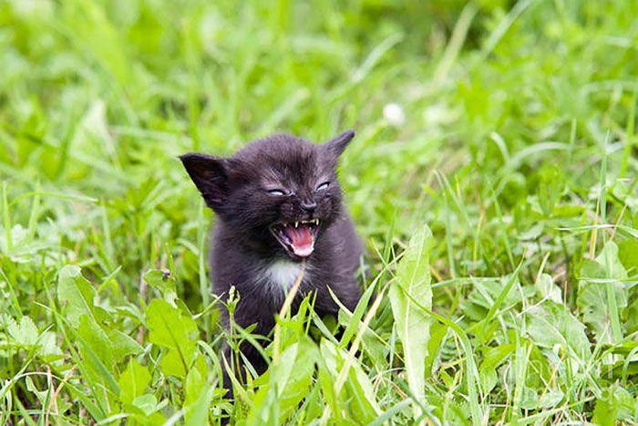 Mérges macska   Fotó via boredpanda.com - PROAKTIVdirekt Életmód magazin és hírek - proaktivdirekt.com