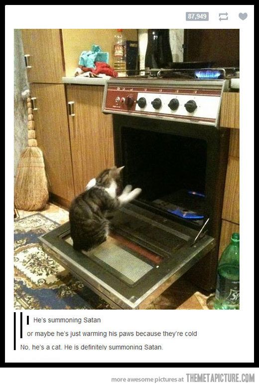 Cats...enough said