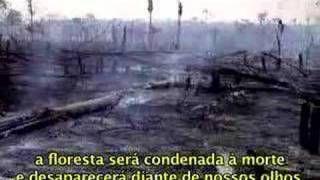 curiosidades ocultas: BRASIL 2016 Desmatamento é o maior em 4 anos 24/09...