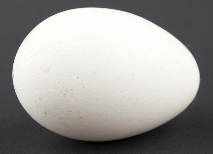 Egg @ DigitaltMuseum.no