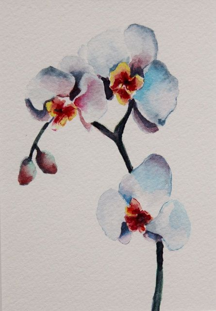 Original watercolor painting - orchids