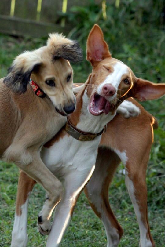 have hound will travel