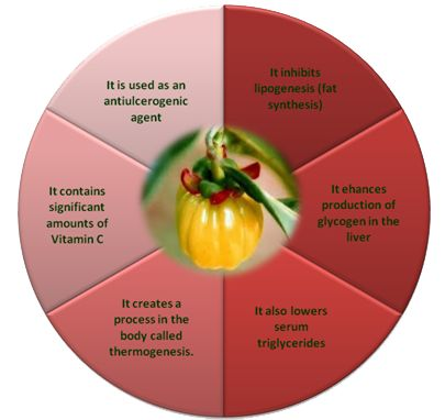 Truth About Garcinia Cambogia HCA. Is it safe to take