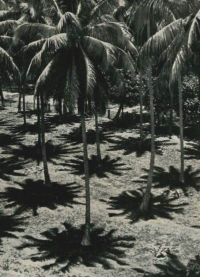 Midday, in the shade of the coconut trees, Tahiti, 1938, René Moreau
