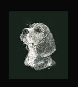 Beagle -  This is the actual size of the scratch art. This size is intended as example of a memorial for an urn. Smaller work, like this, can easily be done for a pendant or jewellery.  I can work from a photo. A web site dedicated to this is planned. In the mean time I can be contacted at sue@suewalters.com #beagle