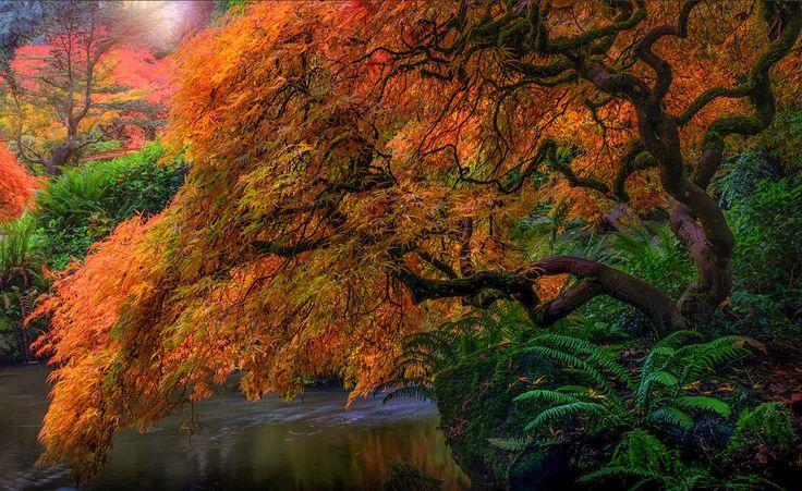 Kubota Gardens (near Seattle, Washington) by Frits