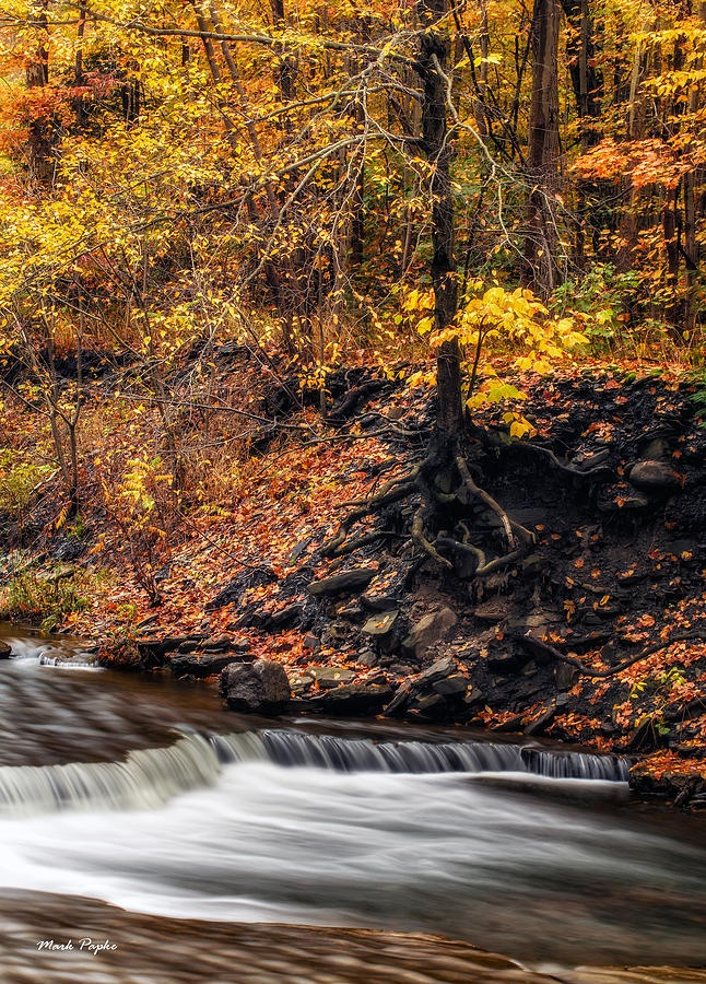 ✮ Autumn Flow