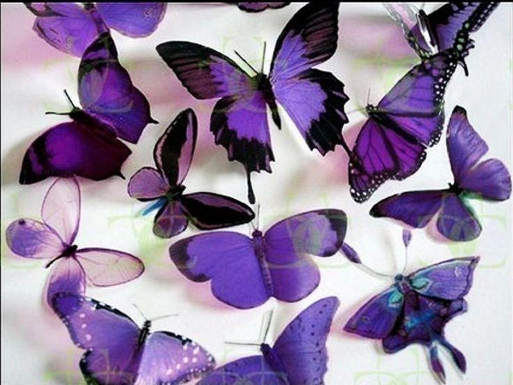 Purple, purple, purple!Colors Purple, Beautiful Butterflies, Purple Butterflies, Favorite Colors, Butterflies Wallpapers, Purple Passion, Things Purple, Pretty, Butterflies Kisses