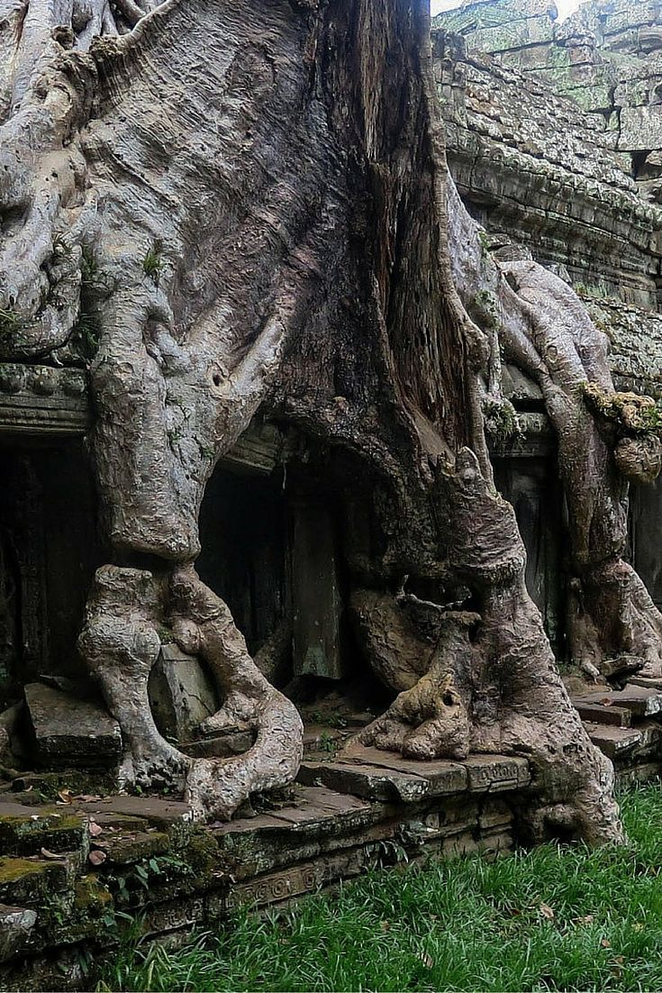 Roots grow into the temple walls at Angkor Wat, Cambodia  http://www.seriouslytravel.com/