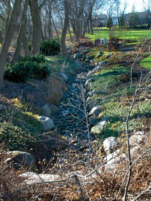 Turn A Drainage Ditch Into A Dandy Display | State-by-State Gardening Web Articles