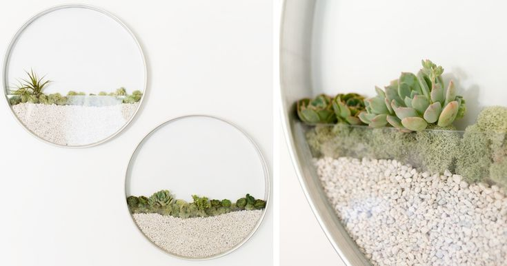 25 Best Images About Terrariums On Pinterest Manzanita Etsy Store And Aquatic Ecosystem