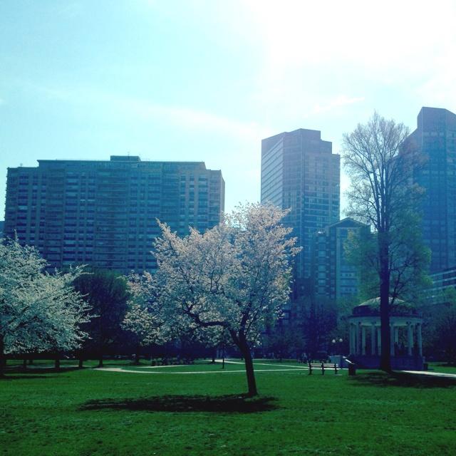 Boston Common in Boston,MA