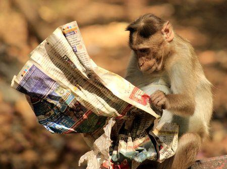 Intelligent Monkey Photo by Vedimuthan Muthu — National Geographic Your Shot