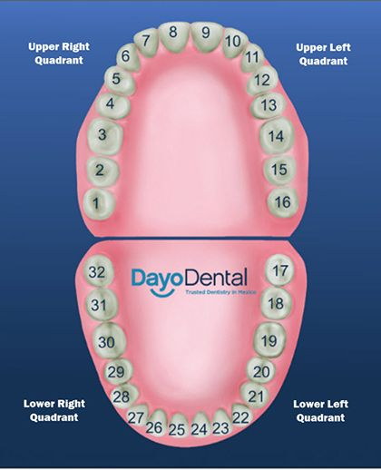 Teeth Number Diagram