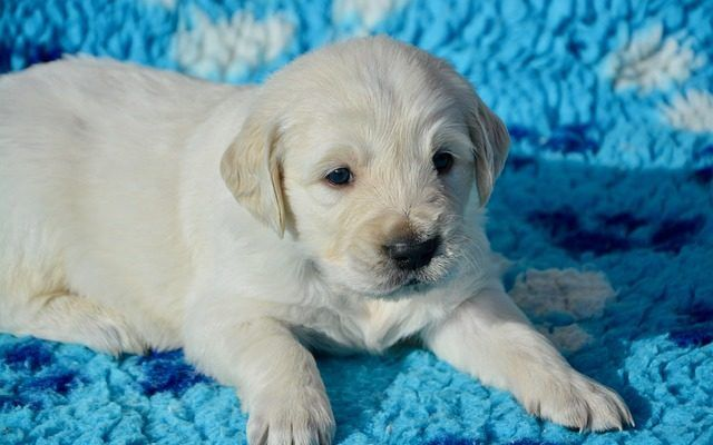Top Male Dog Names For 2020 In 2020 Top Male Dog Names Dog