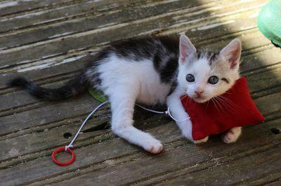 Gioco Lenza con Cordicella e Songalio per Gatti Simon's Cat! <3 #Gioco #Gatto #Gatti #Cat #Kitty #Sonaglio #Cordicella #Lenza #SimonsCat http://www.principini.it/prodotti/gatti/giochi-per-gatti/gioco-lenza-per-gatti-simons-cat