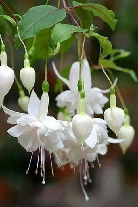 Nice Flower Tattoo Ideas For Women: 2371 Best Flower Garden Ideas Images On Pinterest
