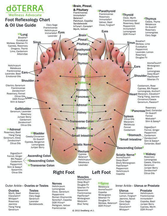 10 Pack Essential Oil Reflexology Chart Oil Use Guide 8 5 X 11 On 14pt Card Stock Foot Reflexology Reflexology Massage Therapy