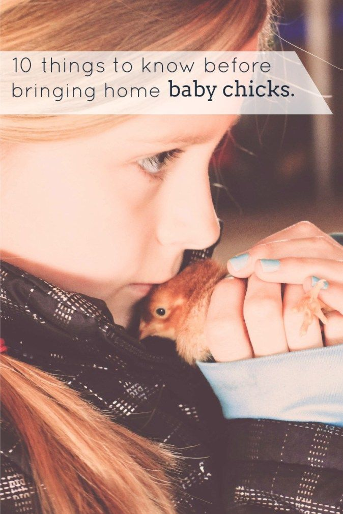 What you need to know before bringing home baby chicks.  thedempsterlogbook.com