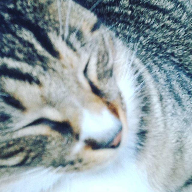 寝ぼけ顔 #cat
