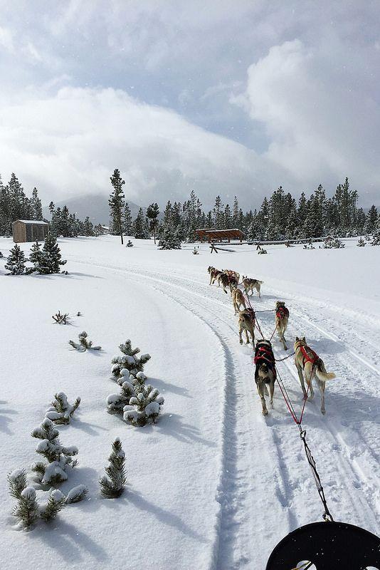 Dog Sledding - Snow Mountain Ranch - Winter Park, CO