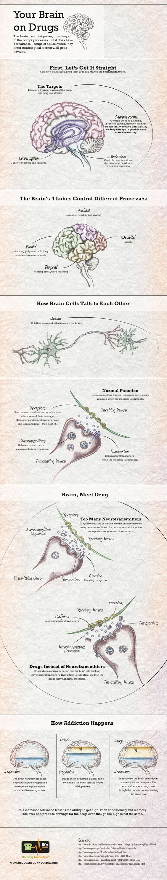 Want to know exactly what happens to the brain on drugs? Check out our INFOGRAPHIC which visually explains effects of drugs on the brain.