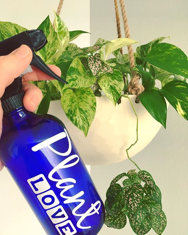 Diy Houseplant Spray Easy To Make In A Glass Bottle Combine