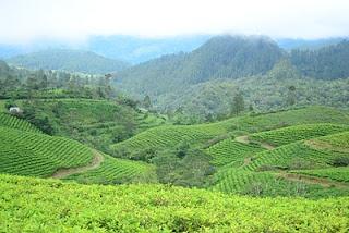 Di Sulawesi Selatan, 90 kilometer dari Makassar ada tempat yang cocok dikunjungi bagi yang mencari tempat yang membuat jalan terus menikmati keindahannya, Hutan Wisata Malino. (In South Sulawesi, 90 kilometer from Makassar, there is a place that will push you to walk enjoying the beautiful scenery there, named Malino Highland)