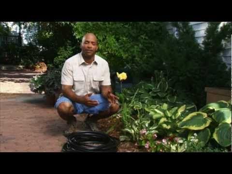 Best 25 low maintenance landscaping ideas on pinterest for Low maintenance herb garden