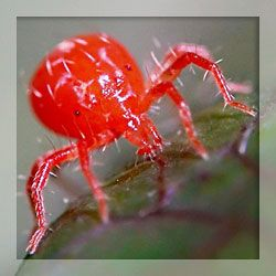Chigger repellents. They sure are gross looking