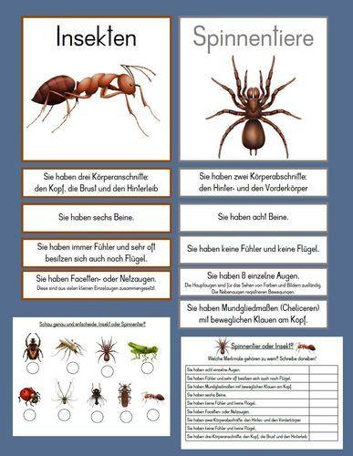 Unterschied Spinnentier – Insekt – Spielend – Leicht – Lernen – Conni :-)