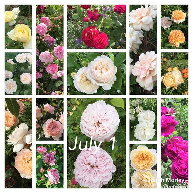 New The 10 Best Garden Ideas Today With Pictures July 1 The