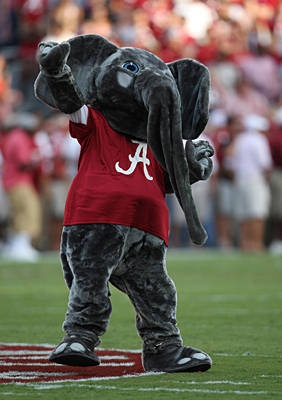 Best Colleges In Alabama >> 17 Best images about Mascots on Pinterest | Kansas jayhawks, Oregon ducks and Sports illustrated ...