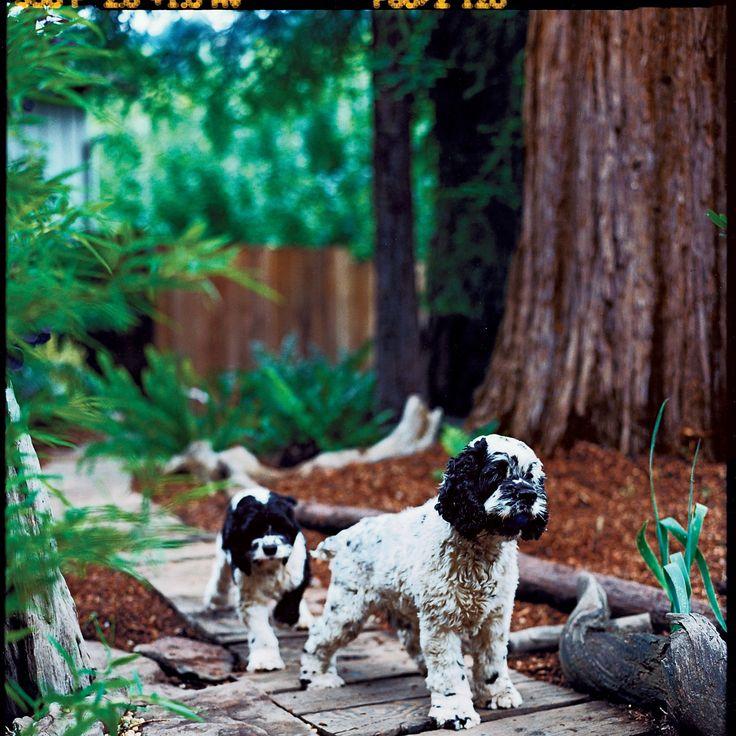 17 Best Images About Pet Friendly Flooring On Pinterest