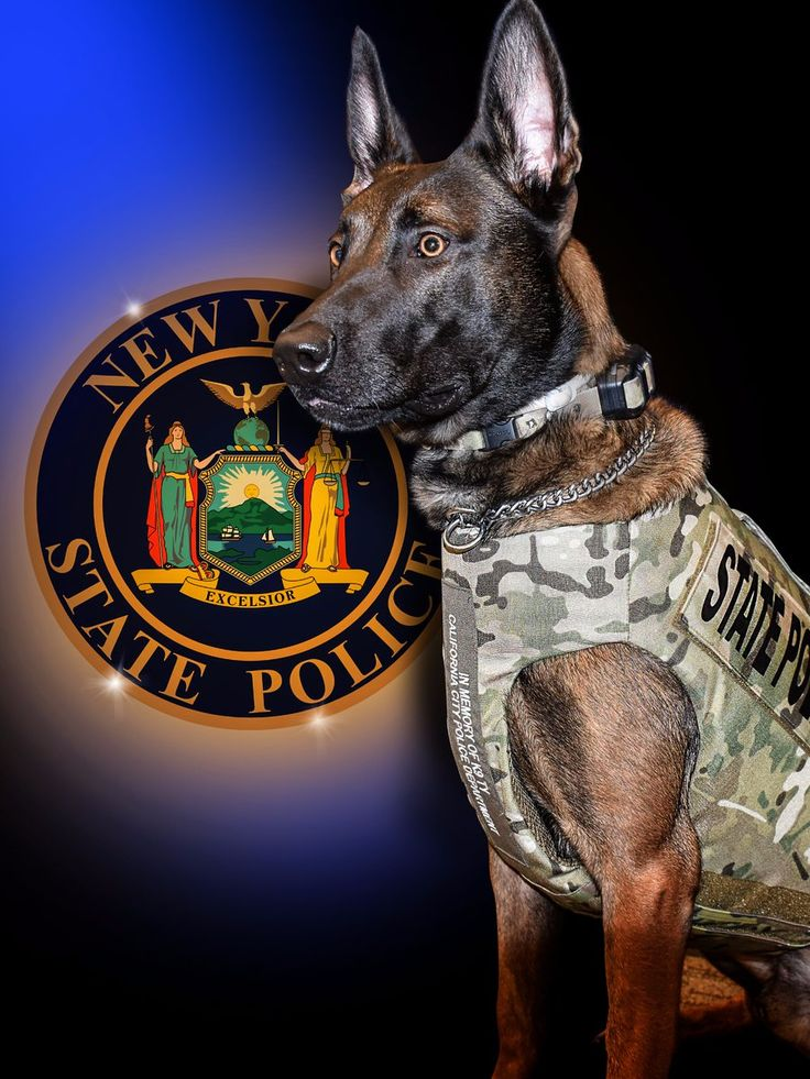 R.I.P. – New York State Police K9 Killed In Action