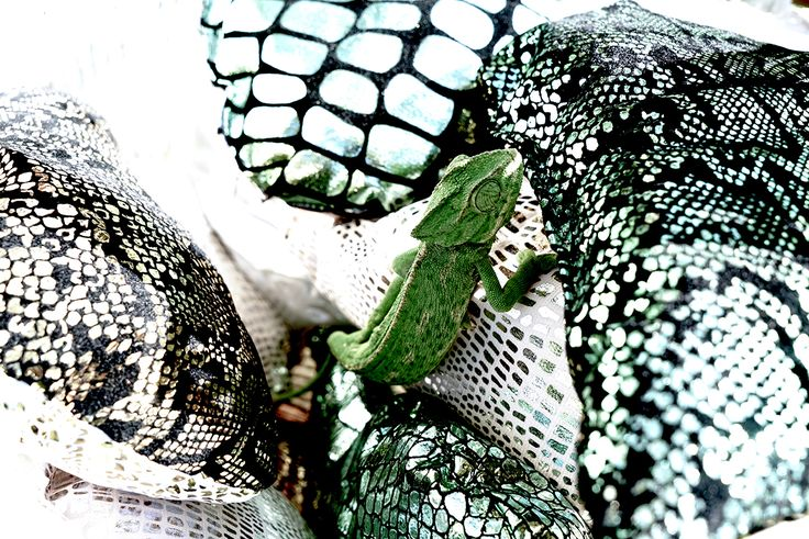 Mimicking nature: our wildlife inspired collection of soft fabrics with reptile patterns in a beautiful range of colors. Flame retardant. Ideal for deco, visual merchandising and event. #decoration #visualmerchandising #event #show #wildlife #exotic #reptile