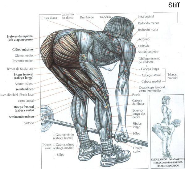Stiff!!!!! Torneia e enxuga as pernas, coxas e abdome. Os músculos ficam tornados e firmes. Dá-nos mais força e resistência. Aumenta o volume muscular. Deixa mais flexível. Emagrece mais rápido do que os outros exercícios. Corrige nossa postura. Diminui centímetros da cintura. Acelera nosso metabolismo. Estimula a produção de Hormônio. Trabalha as áreas mais importantes do corpo. Aumenta nossa imunidade. Terá mais facilidade em agachar e levantar no dia a dia. Fortalecedor de coxas e bumbum