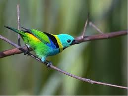 Znalezione obrazy dla zapytania kolorowe ptaki