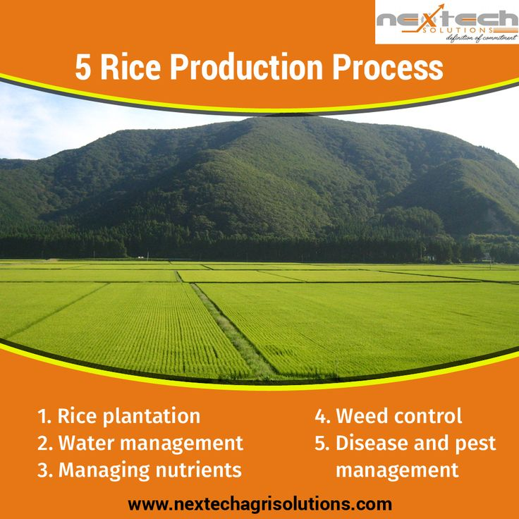 Nextech Grain Processing & Engineering Solutions PVT LTD offers the complete solution for #GreenFieldStage to the #FinishedProducts. Visit to know about #RiceProductionProcess 👉https://goo.gl/7Xn6W