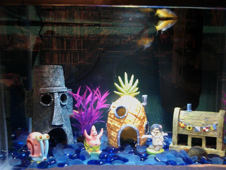 12 best for pluto and mikey images on pinterest for Spongebob fish tank