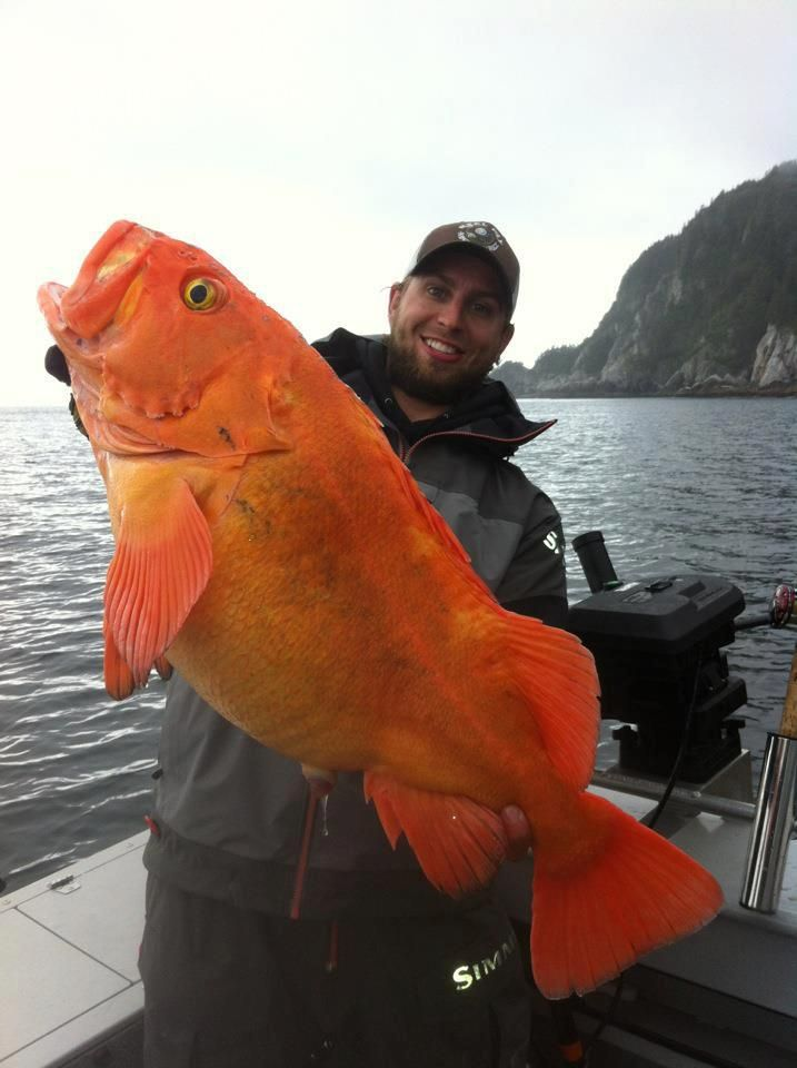72 best rockfish and lingcod images on pinterest fishing for Alaskan salmon fishing