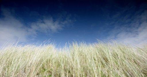 Sana Beach, Sea Oat, Ardnamurchan, Scotland, Blue Sky, Great Britain, Wind, Grass, Cloud, Coast, Non Urban Scene, Western Europe, Plant, No People, Sunshine, Europe (Continent), Day, Stock Footage,