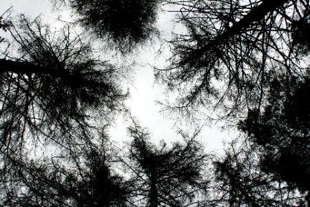 skogshimmelfeb08.jpg 450 × 300 pixlar