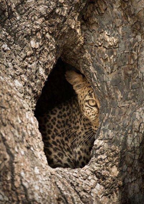 Peek-a-boo ..