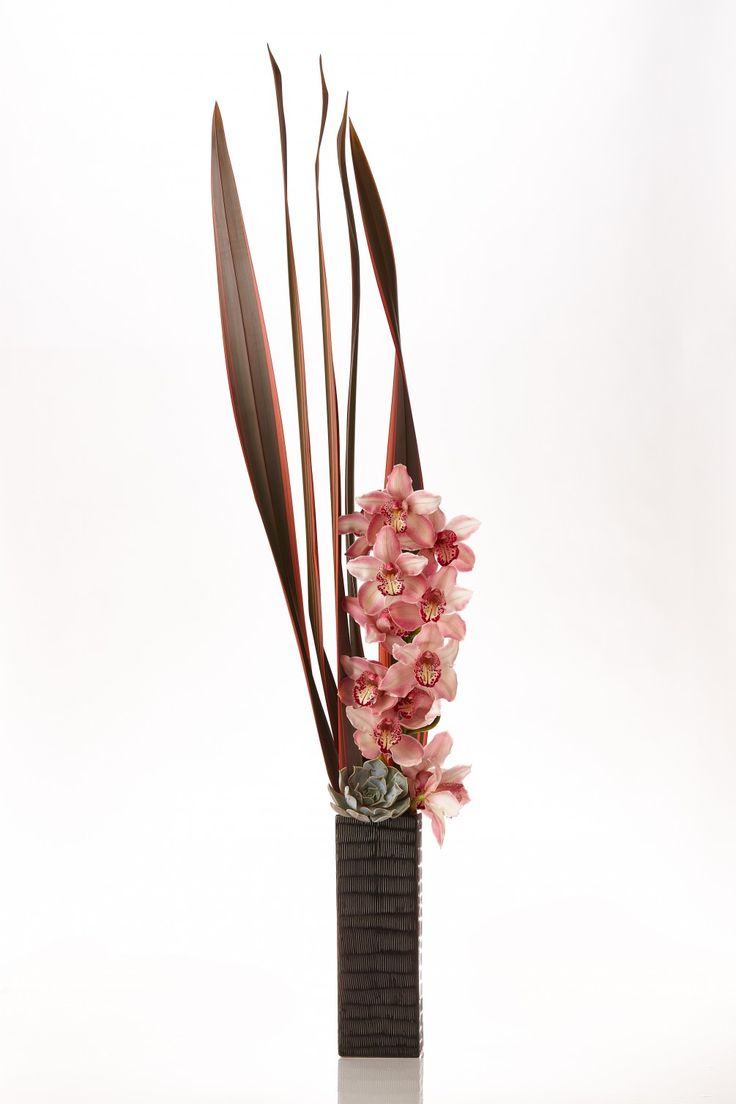 https://www.google.com/search?q=orchid succulent