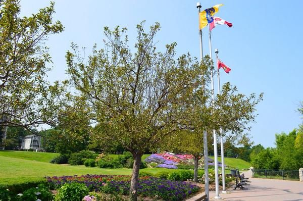 Beautiful blooms at Sam Lawrence Park in Hamilton, ON